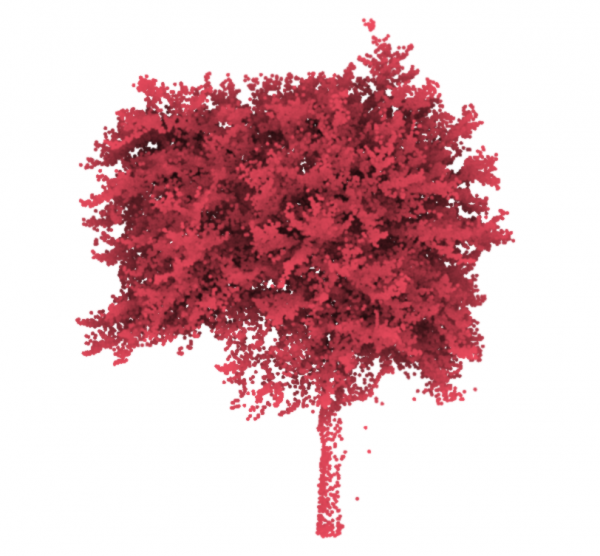 Figure 2: A sample labelled tree that shows its trunk, branches and leaves have been precisely scanned.